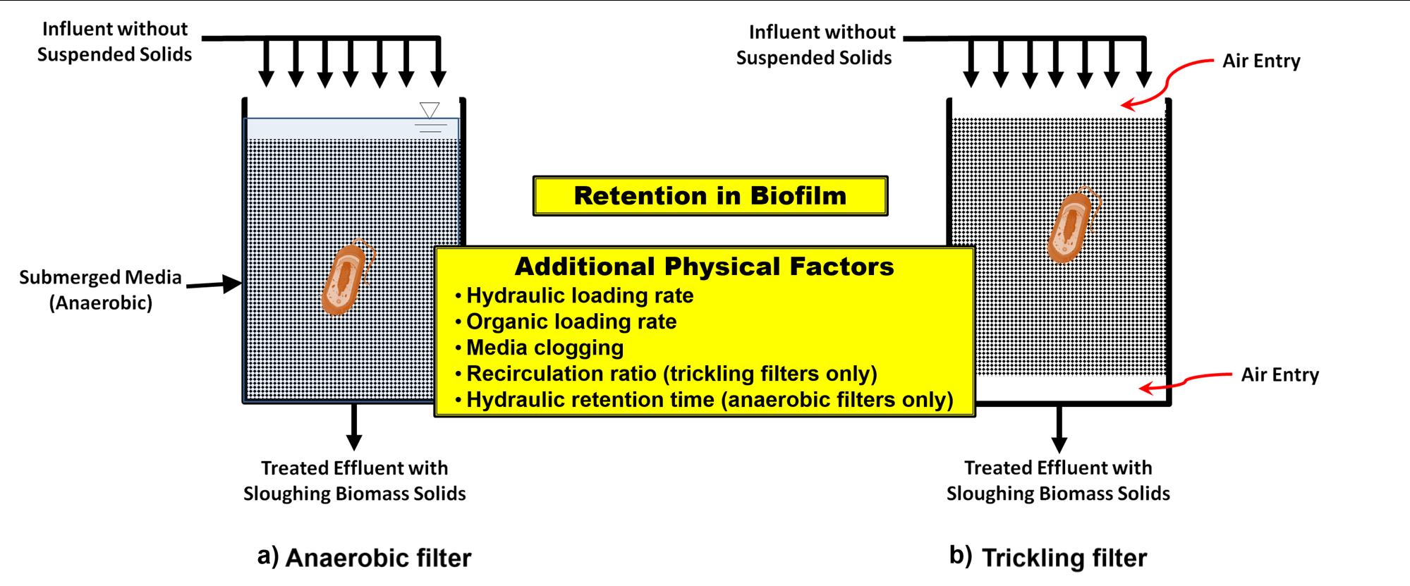 3 1 retention in the biofilm