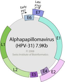 Wart virus length. Meaning of helminths in marathi. Specii parazite cu vierme plat