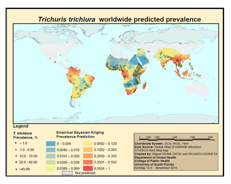 Worldwide prediction of trichuris trichiura prevalence 2014 data worldwide prediction of trichuris trichiura prevalence 2014 data source global atlas of helminth infections sthsch web map app gumiabroncs Gallery