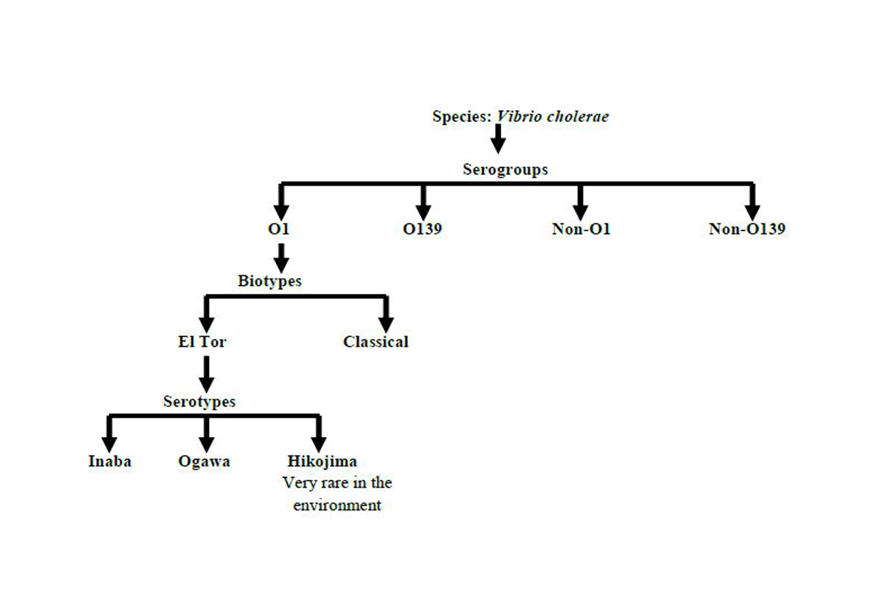 kolera vibrio parazita